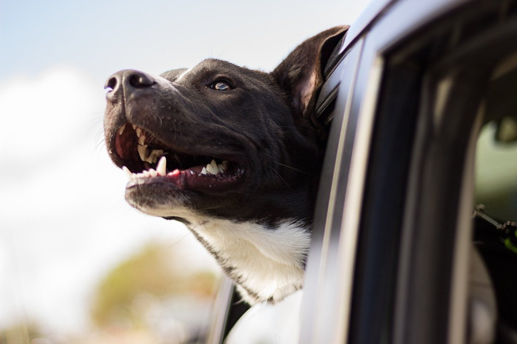 A brown dog with its face out a car window. The dog looks like it is smiling,